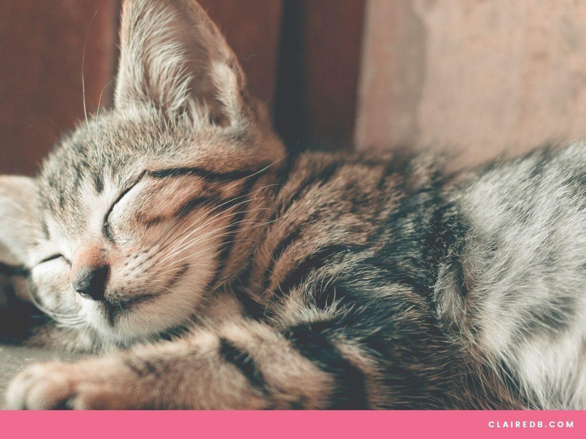 Time management tricks for entrepreneurs - sleeping cat